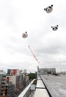 Balloons shaped like pandas are seen rising from the roof of the Matsuzakaya department store in Tokyo's Taito Ward on June 13, 2017. The pink panda is trailing a banner reading,