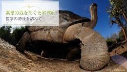 ガラパゴスには島々によって甲羅の形が違うガラパゴスゾウガメ(学名:Geochelone elephantopus)が生息している。体重が300kgにもなり、寿命は100~200年と言われている
