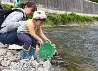 兵庫県川西市の一庫大路次川で稚アユを放流する親子連れ=同市提供