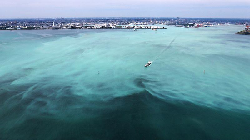 東京湾沿岸:青潮 千葉、帯状に...