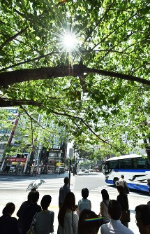In this May 20, 2017 file photo, pedestrians wait for a traffic signal to change under the shade of a tree in Tokyo's Chuo Ward. (Mainichi)