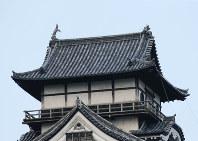 しゃちほこ(右)の一部が壊れた国宝「犬山城」=愛知県犬山市で2017年7月13日午前7時21分、兵藤公治撮影