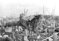 (10)倒れた国泰寺のクスノキ。樹齢300年で天然記念物に指定され、市電建設の際、軌道を迂回させた(爆心地から500メートル)=広島市小町(現広島市中区小町)で1945年9月11日前後、山上圓太郎撮影 ※広島平和記念資料館(広島原爆資料館)の検証による