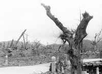 (18)広島城二の丸を撮影(爆心地から750メートル)。右端は、被爆樹木として現存するユーカリ=現広島市中区基町で1945年9月11日前後、山上圓太郎撮影 ※広島平和記念資料館(広島原爆資料館)の検証による