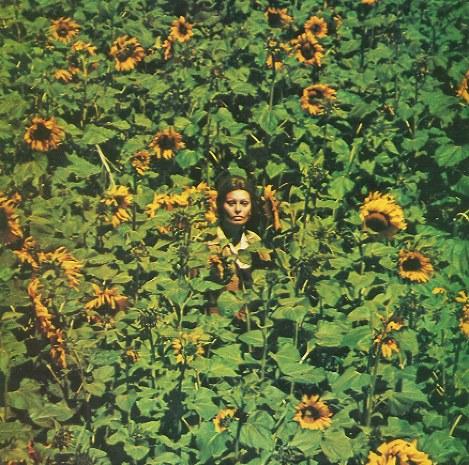 ひまわり畑を通り抜けるソフィア・ローレン演じるジョバンナ。ウクライナ大使館によると、ひまわり畑のシーンは、ウクライナ(当時はソ連の共和国)の首都キエフから南に約500キロのヘルソン州で撮影されたという。ブルーレイ(KADOKAWA、5184円)とDVD(エスピーオー、3024円)が発売中。発売元はともにIMAGICA TV