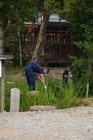 竹島叶実容疑者が逮捕された有間神社を調べる捜査員=神戸市北区で2017年7月17日午前10時43分、井上元宏撮影