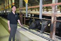 餌を食べる近江牛と永谷武久さん。「牛にはそれぞれ個性があります。だから、育てがいがある」と話す=滋賀県高島市安曇川町上古賀で、土居和弘撮影