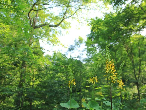 The Afan Woodland in Shinano, Nagano Prefecture, is pictured in this photo taken on July 10, 2017. (Photo courtesy of the C. W. Nicol Afan Woodland Trust)