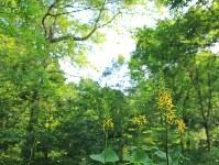 初夏のアファンの森=長野県信濃町で10日、C・W・ニコル・アファンの森財団提供