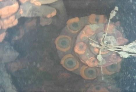 東京電力福島第1原発3号機の原子炉格納容器内でロボットが撮影した画像。水中で炉内の構造物が写っている(国際廃炉研究開発機構提供)=2017年7月19日撮影