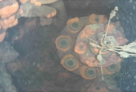 In Photos: Swimming robot probes Fukushima reactor to find melted fuel