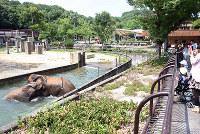 アフリカゾウの大迫力の水浴びに見入る人々=愛媛県砥部町上原町の県立とべ動物園で、木島諒子撮影