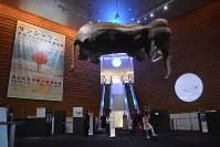 巨大な白象がつり下げられた森美術館のセンターアトリウム=東京都港区で