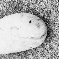 比嘉良治写真展「時がこもる浜・沖縄」より=沖縄県伊平屋村