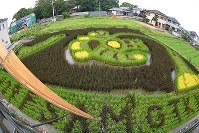 宇宙飛行士やスペースシャトルなどが浮かび上がった「田んぼアート」=香川県善通寺市下吉田町で、山中尚登撮影