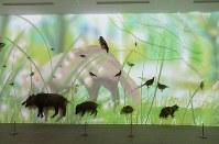 人気のプロジェクションマッピング。剥製の置かれた壁一面に高尾の自然と動物のアニメーションが投映される