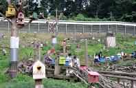 放し飼い広場には約200匹のタイワンリスがすんでいる=東京都町田市金井町で
