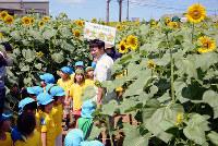 ヒマワリで作られた迷路の中を歩く園児たち=石川県津幡町で、石川将来撮影