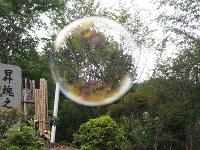 昇魂之碑の前で、子供たちが吹いたシャボン玉が大きくふくらみ、宙を舞った=群馬県上野村の御巣鷹の尾根で7月22日、萩尾信也撮影