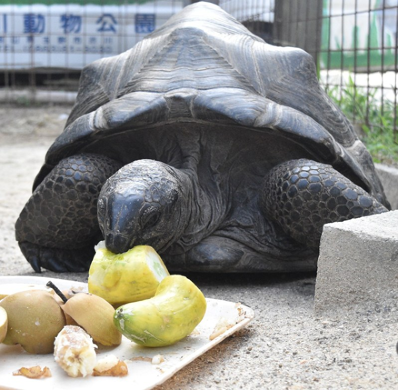 Zoo's missing giant turtle found by family in Okayama