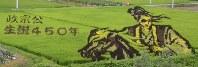 伊達政宗の雄姿が田んぼに描かれている=山形県米沢市簗沢で2017年8月14日14時20分、佐藤良一撮影