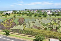 うっすらと浮かび上がった「桃太郎」=青森県田舎館村で2017年7月9日、藤田晴雄撮影