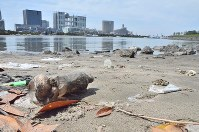 Plastic waste is seen washed up on the beach at Odaiba Seaside Park in Tokyo's Minato Ward in this June 3, 2017 file photo. (Mainichi)