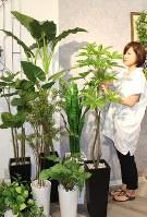 パキラやサンセベリア、ウンベラータなど床に置ける大きな観葉植物も種類が豊富だ