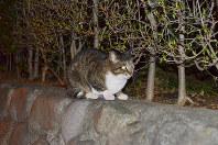 市街地に生息する野良猫。繁殖力が強い猫を不妊・去勢して処分数を減らすことが課題だ=さいたま市の別所沼公園で、錦織祐一撮影