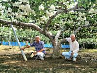 樹齢100年を超す廿世紀梨の下で「昔の品種は強い」と話す中元さん(左)と阪口さん