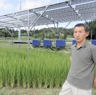 稲の生育に満足げな斎藤広幸さん。水田でのソーラーシェアリングの実例はまだ少ない=福島県川俣町で、尾中香尚里撮影
