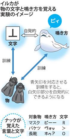 イルカが物の文字と鳴き方を覚える実験のイメージ