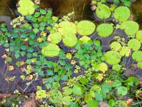 水草の広がり