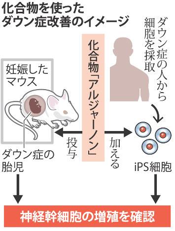化合物を使ったダウン症改善のイメージ