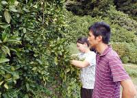 ミカンの出来栄えを確かめる石川翔さん、美緒さん夫妻=徳島県勝浦町三渓で、高橋哲治撮影