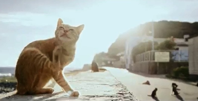 'Cat island' sends invitation letter to British singer Ed ...