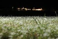 三陸鉄道北リアス線の田老駅そばに咲くそばの花=岩手県宮古市で2017年9月5日午後7時58分、小出洋平撮影