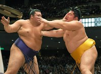 張り手で攻め合う遠藤(右)と豊山。最後は遠藤が引き落としで豊山を降した=両国国技館で2017年9月13日、手塚耕一郎撮影
