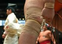 テーピングが何重にも巻かれた魁聖の右膝=両国国技館で2017年9月13日、手塚耕一郎撮影