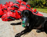 9月19日、ハリケーン「イルマ」の被害を受けた米フロリダ州の民家で、停電のため使用したガソリン駆動の自家発電装置で住民とペットが一酸化炭素中毒を発症する出来事があったが、駆けつけた隊員らが人間用とペット用の酸素マスクを使用し救助措置に成功した。写真は2013年4月撮影(2017年 ロイター/Mike Blake)