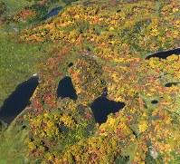 見ごろを迎えている北海道・大雪山系の紅葉=2017年9月22日午前11時42分、本社機「希望」から竹内幹撮影
