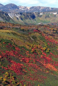 見ごろを迎えている北海道・大雪山系の紅葉=2017年9月22日午前11時55分、本社機「希望」から竹内幹撮影