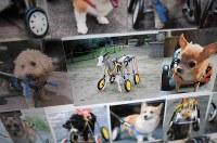 店内にはこれまでに作った車椅子で歩く動物たちの写真が貼られている。猫やウサギの他、ヤギにも製作した=大阪市住之江区で2017年8月25日、久保玲撮影