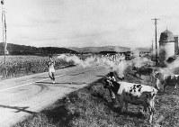 北海道コースの長万部―森間で、長万部町の花岡地区を南下する聖火。ランナーは若松さん=1964年9月14日撮影