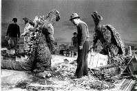 東宝「ゴジラの逆襲」の特撮場面。スタジオ内で市街セットを壊すゴジラに演技指導をする円谷英二特技監督=1955年3月