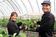 「イチゴ栽培は楽しくて」と笑みを見せるキミエさんと夫のオリベイラさん=滋賀県竜王町山之上の「高野いちご園」で、大澤重人撮影