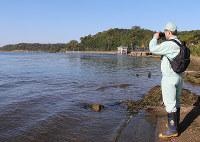 宍道湖沿岸や湖面の鳥を確認する職員=松江市岡本町で、根岸愛実撮影