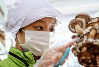 シイタケの状態を確かめるメンバー=大阪市西成区の「街かどあぐりにしなり よろしい茸工房」で、幾島健太郎撮影
