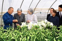 Emperor Akihito and Empress Michiko listen as a lily farm owner, left, explains how lilies are grown at his farm in China, Kagoshima Prefecture, on Nov. 18, 2017. (Pool photo)