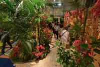 トンガ伝統の樹皮布「ヌガトゥ」を飾った意欲作が目を引いた「10カ国のガーデニング」。「アートコレクション展」とともに、関係先の協力で実現しているチャリティーイベントだ=ホテルオークラ東京提供